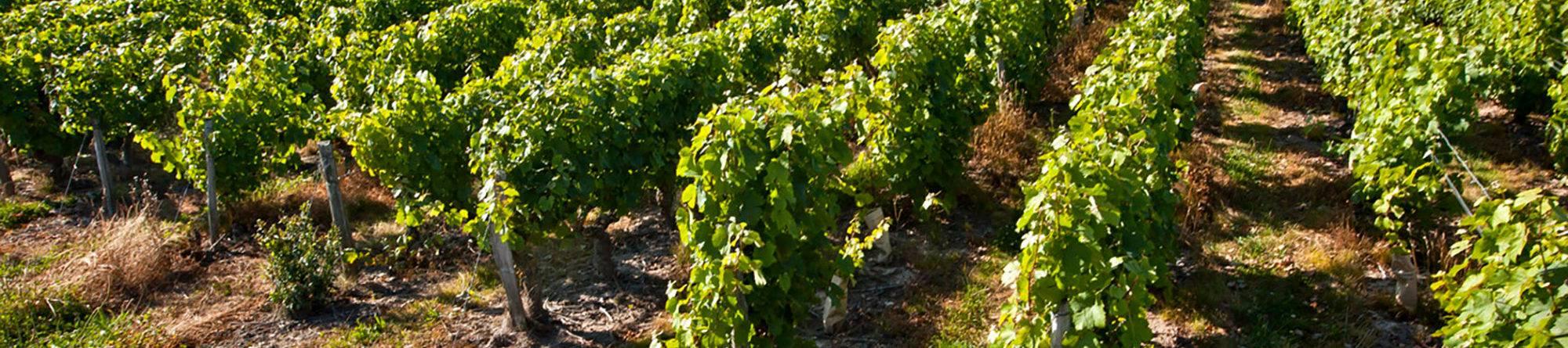 Vignobles Feray - Vins de Loire AOP