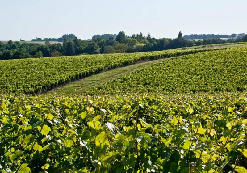 Domaine Vaugondy en Indre-et-Loire